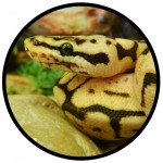 SNAKES - REPTILES AT B&B PET STOP