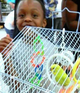 "parakeet at Pickles' ""Bird""thday Party at B&B Pet Stop in Mobile, Alabama"
