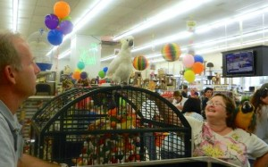"Pickles on her cage at Pickles' ""Bird""thday Party at B&B Pet Stop in Mobile, Alabama"
