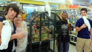 """Cockatoos at Pickles' """"Bird""""thday Party at B&B Pet Stop in Mobile, Alabama"""