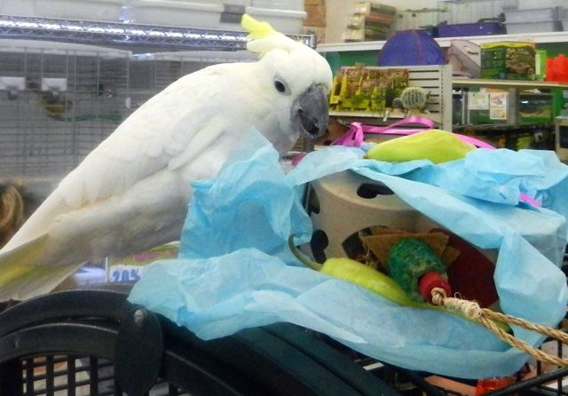 "Pickles' ""Bird""thday Party at B&B Pet Stop in Mobile, Alabama"