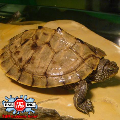 Turtles - B&B Pet Stop