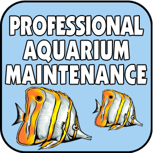 Professional Aquarium Maintenance Service